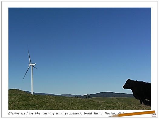 Wind-Turbines-Raglan-SusanCharlotteGraphics